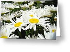 Daisy Flower Field Art Prints White Daisies Greeting Card