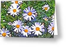 Daisy Flower Garden Abstract Greeting Card