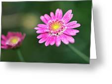 Daisy Flower Greeting Card by Pradeep Raja Prints