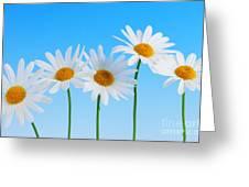 Daisy Flowers On Blue Greeting Card