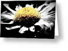 Daisy Gray Greeting Card