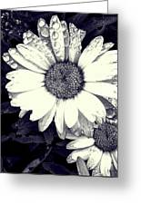 Daisy In Black And White  Greeting Card