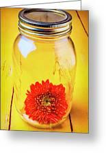 Daisy In Glass Jar Greeting Card