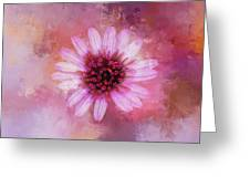 Daisy In Magenta Greeting Card