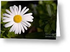 Daisy In The Sun Greeting Card