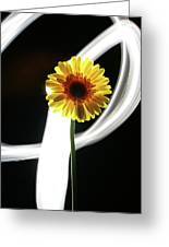 Daisy In White Greeting Card