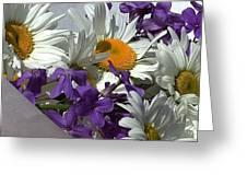 Daisy Mix Greeting Card