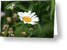 Daisy One Greeting Card