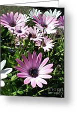Daisy Patch Greeting Card by Kaye Menner
