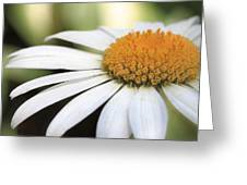 Daisy Petals Greeting Card