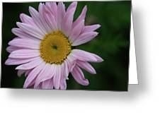 Daisy Power Greeting Card