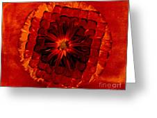 Daisy Red Abstract Greeting Card