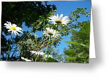 Daisy Rose Greeting Card