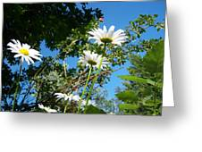 Daisy Rose Greeting Card