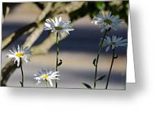 Daisy Soldiers Greeting Card