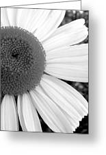 Daisy Study 1 Greeting Card