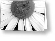 Daisy Study 2 Greeting Card