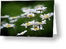Daisy Summer Sunshine Greeting Card
