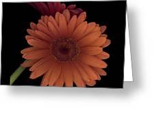 Daisy Tilt Greeting Card