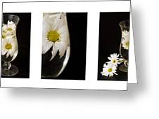Daisy Triptych Greeting Card