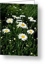 Daisy Tunnel Greeting Card