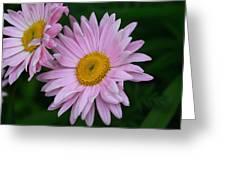 Daisy Twins Greeting Card