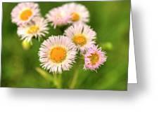 Daisy Weeds Greeting Card
