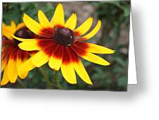 Daisy With A Question Mark Greeting Card