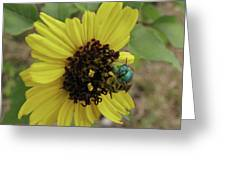 Daisy With Blue Bee Greeting Card