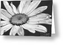 Daisy With Raindrops In Black And White Greeting Card