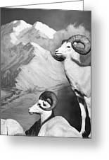 Dall Sheep Greeting Card