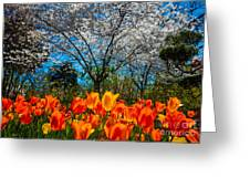 Dallas Arboretum Tulips And Cherries Greeting Card
