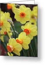 Dallas Daffodils 01 Greeting Card