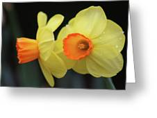 Dallas Daffodils 07 Greeting Card