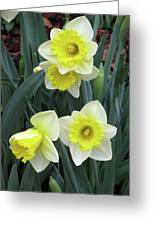 Dallas Daffodils 08 Greeting Card