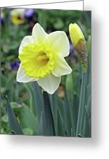 Dallas Daffodils 64 Greeting Card