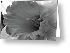 Dallas Daffodils 74 Greeting Card