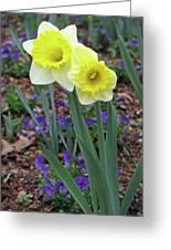 Dallas Daffodils 78 Greeting Card