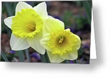 Dallas Daffodils 79 Greeting Card