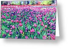 Dallas Tulips Greeting Card