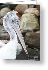 Dalmatian Pelican Greeting Card