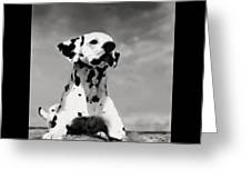 Dalmation Puppy Greeting Card