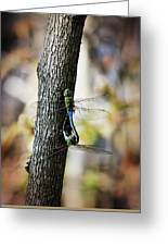 Dragonflies Need Love Too Greeting Card