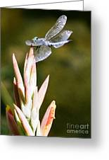 Damselfly Greeting Card