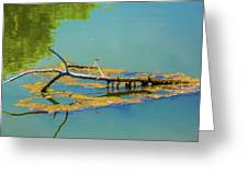 Damselfly On A Lake Greeting Card by Tom Potter