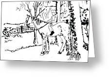 Dan And Horse 11 Greeting Card