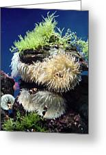 Dance Of The Anemones Greeting Card