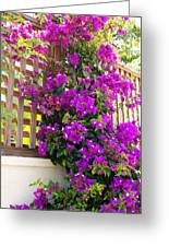 Dance Of The Bougainvilla Greeting Card