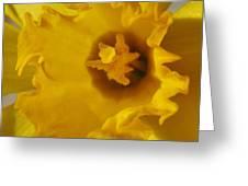 Dance Of The Daffodil Greeting Card