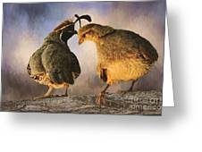 Dance Of The Quail Greeting Card